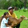 Mejora de manejo de animales